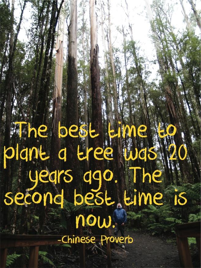 Plant a tree qoute